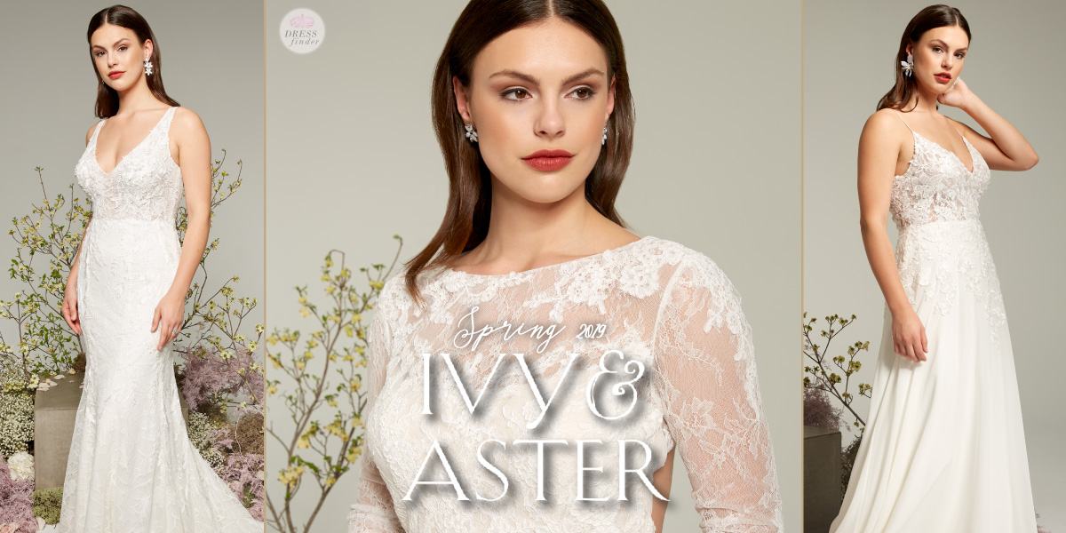 Ivy & Aster